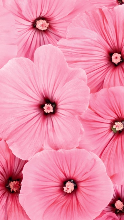Beautiful Flowers Wallpapers Best Flowers For Lock Screen And Home