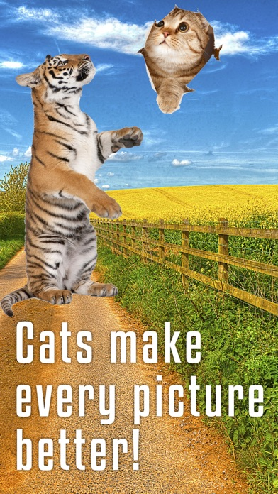 Sticky Cat - Free: Fun Stickers for pics screenshot four