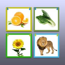 水果.蔬菜.动物.植物-儿歌识物基础篇
