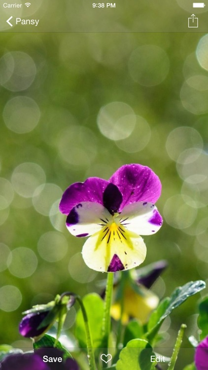 Flower WP Pro ~Extremely HD Flowers Wallpaper Image Gallery screenshot-3