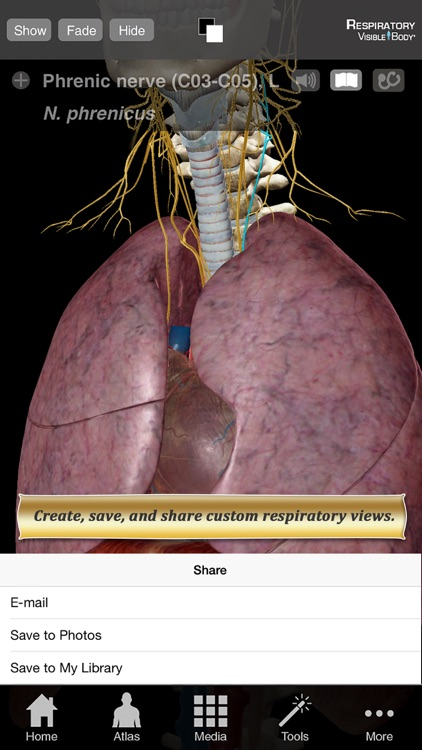 Respiratory Anatomy Atlas: Essential Reference for Students and Healthcare Professionals