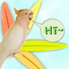 parrot sound effects