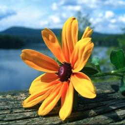 Flowers Wiki