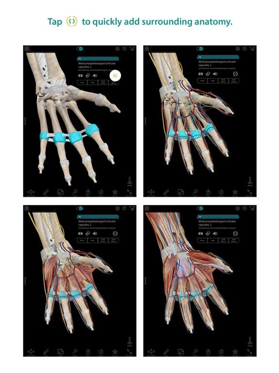 Screenshot #2 for Human Anatomy Atlas – 3D Anatomical Model of the Human Body