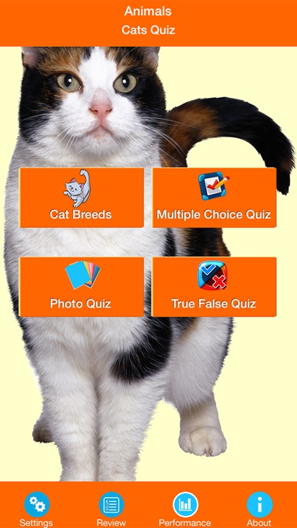 Animals : Cats & Kittens Quiz