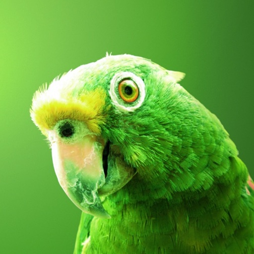 Parrots Wallpapers, Beautiful Flying Birds Images