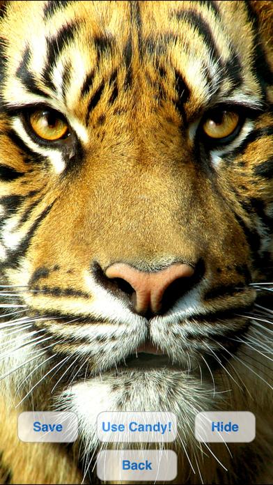 Wild Cats Slideshow & Wallpapers screenshot one