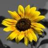 Splash of Color Pro: Black & White Photo Maker