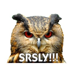 Talking Owl Sticker for iMessage