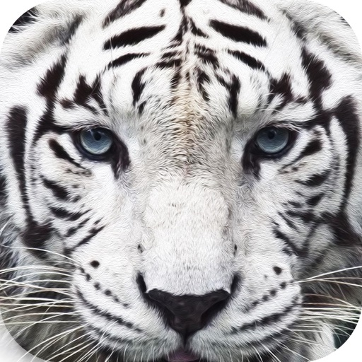 Wildlife Quest Furious Tiger