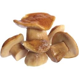 Mushroom Stickers!