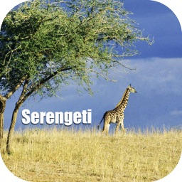 Serengeti - Africa Tourist Travel Guide