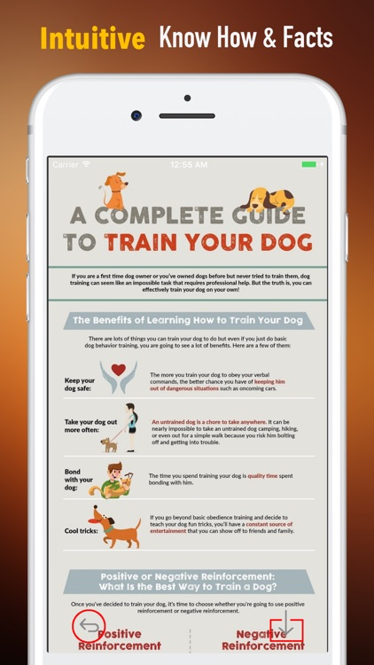 How to Train Your Dog-Puppy Training and Guide by Mingzhen Guan