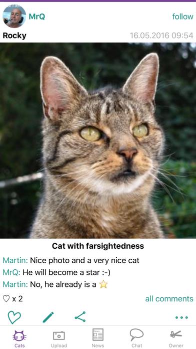 Felisz - a forum for cat photos & cats lovers screenshot one