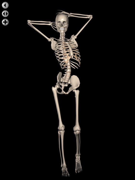 360 Anatomy for Artists HD: Female Figure screenshot-3