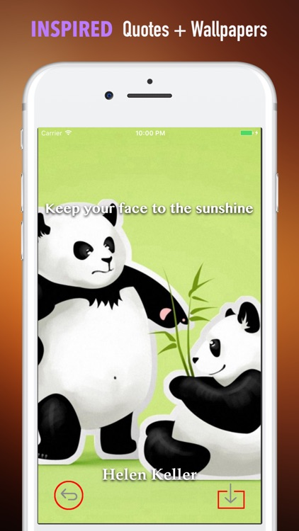 Panda Wallpapers HD- Backgrounds and Art Pictures screenshot-4