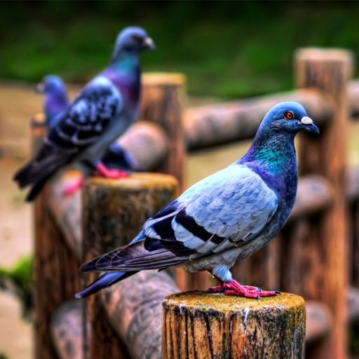 Pigeon Wallpapers HD: Quotes Backgrounds