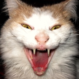 Scary Cat - Scare Prank
