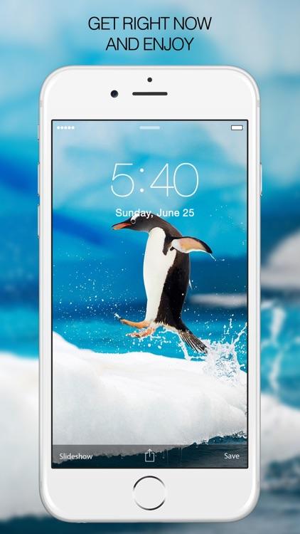 Penguin Wallpapers – Penguin Pictures & Background screenshot-3