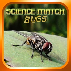 Activities of Science Match Bugs