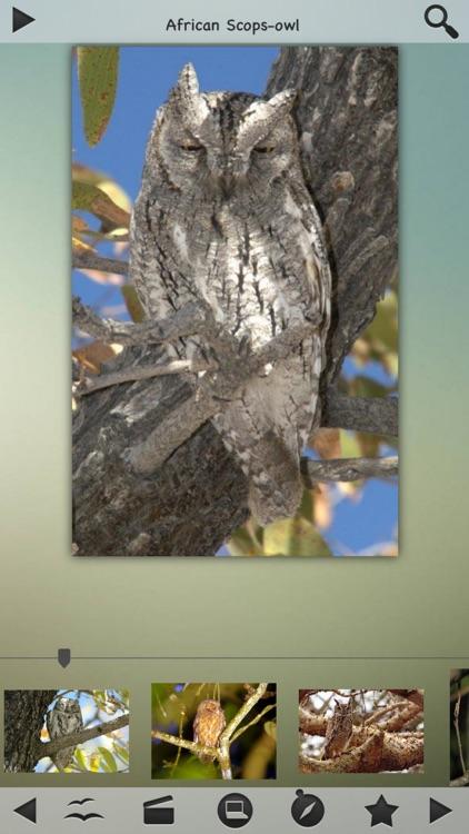 Owls Encyclopedia screenshot-3