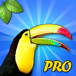 Safari Sound Match Pro