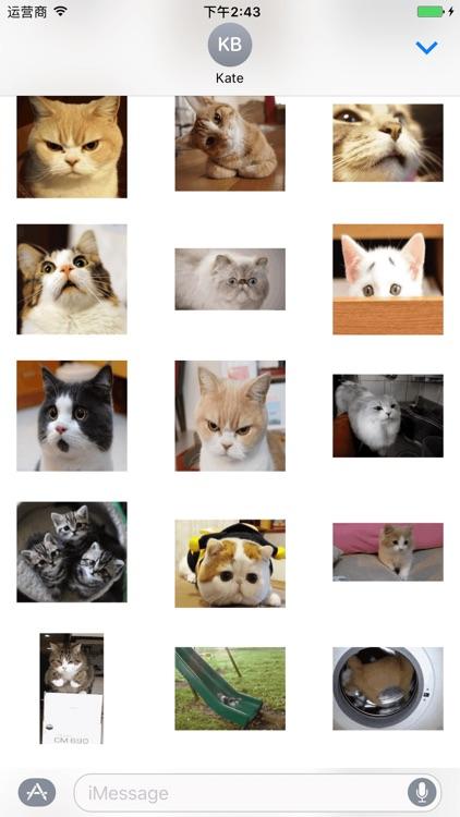 Small Kitty screenshot-4