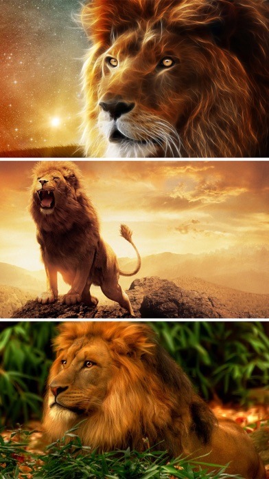 Lion Wallpapers Hd Great Lions Pictures Catalog Screenshot On Ios