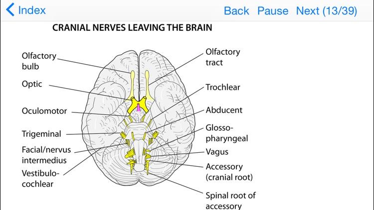 Anatomy Lectures Topics in Focus screenshot-3