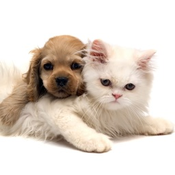 Cats and Dogs Breeds