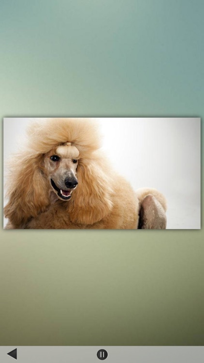 Cats and Dogs Breeds screenshot-3