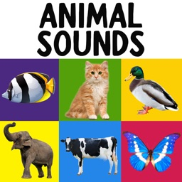 My First Words - Animals Sounds