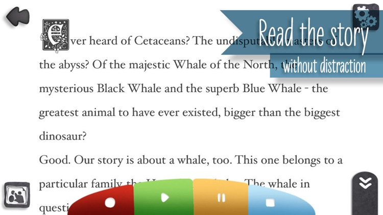 Bumpy, the bumpy whale