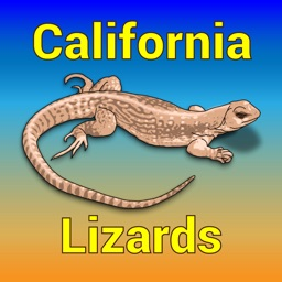 California Lizards - Guide to Common Species