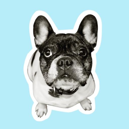 From Frank Pet Speak Stickers