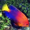 魚の図鑑 フィッシュウォッチングガイド