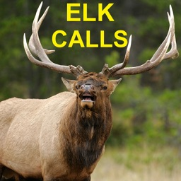Elk Calls & Elk Bugle for Elk Hunting