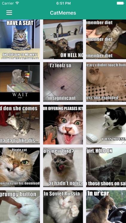 Funny Cat Pro - News, Videos & Cute Cat Pictures screenshot-3