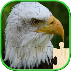 Activities of Birds Jigsaw Puzzles For Kids