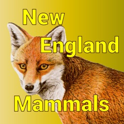 New England Mammals - Guide to Common Species