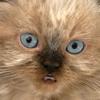 Gigabyte Solutions Ltd - Talking Kitten artwork