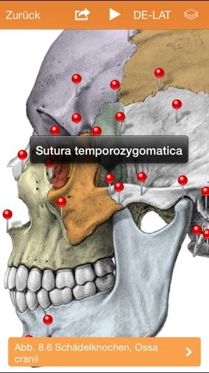 Sobotta Anatomie Atlas im App Store