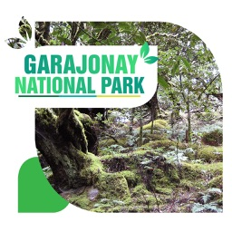 Garajonay National Park Travel Guide