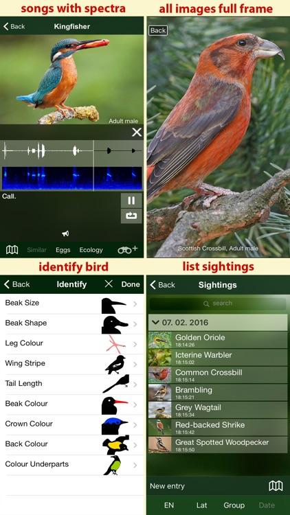 Birds of Great Britain - a Sunbird field guide screenshot-4