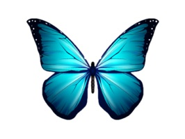 Butterfly Stickers For iMessage
