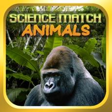 Activities of Science Match Animals