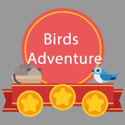 Birds Crazy Adventure
