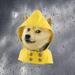 单身狗天气 -噗!带弹幕的空气质量天气预报