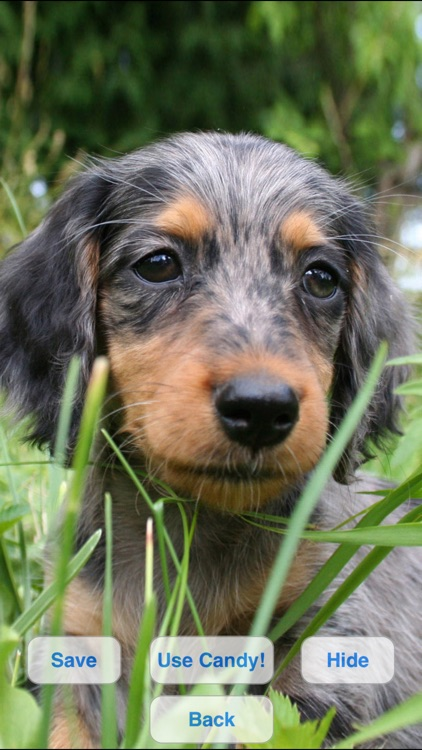Cute Dogs Slideshow & Wallpapers (HD)