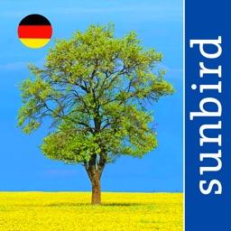 Alle Bäume Deutschland - 1000 Arten bestimmen